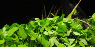 fenugreek- health benefits of methi or fenugreek