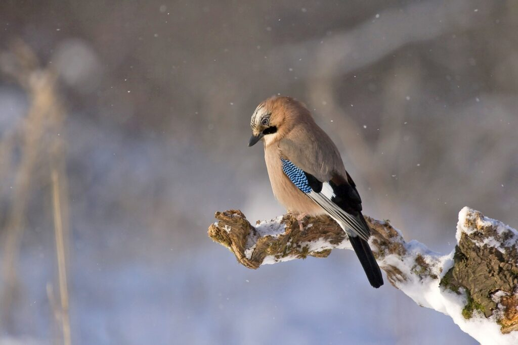 Save Birds from Razor Blades Campaign,